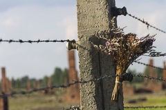 A bunch of flowers on a barbed wire fence in Auschwitz Royalty Free Stock Photos