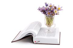 Bunch of flowers and Bible. Bible Isolated, open in psalms. Bunch of flowers Pulsatilla Royalty Free Stock Photo