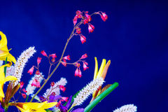 Bunch of flowers on a blue background Royalty Free Stock Images