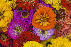 Bunch of Flowers in a bouquet, close up. A bunch of flowers arranged in a buoquet Stock Image