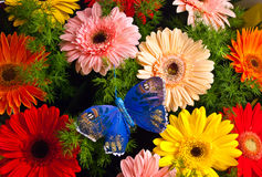 Bunch of flowers with the dark blue butterfly. It is a lot of colours Stock Photography