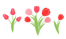Bunch of  flowers. Tulip Stock Images