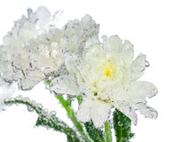 Bunch of flowers with water drops on leaves Royalty Free Stock Photography