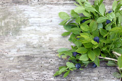 Bunch forest blueberries Stock Image
