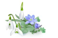Bunch of Forest flowers, messengers of spring - Background. Royalty Free Stock Photography