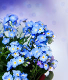 A bunch of forget me not flowers Royalty Free Stock Photos