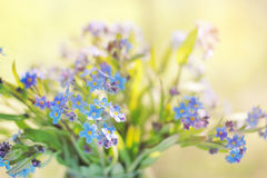 Bunch of  forget-me-nots Royalty Free Stock Photo