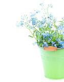 Bunch of forget-me-nots flowers royalty free stock image