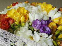 Bunch of freesias Royalty Free Stock Photography
