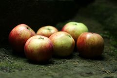 Bunch of fresh apples Stock Images