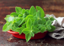 Bunch of fresh aroma mint leaves Stock Photography