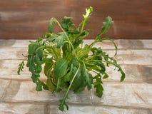 Bunch of fresh arugula salad close up royalty free stock photography