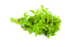 Bunch of fresh Basil herb /  isolated Stock Photo