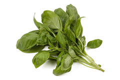 Bunch of fresh basil leaves isolated Stock Image
