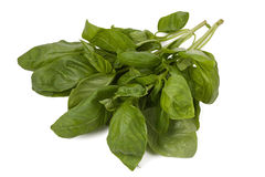 Bunch of fresh basil leaves isolated on white background Royalty Free Stock Photos