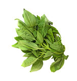 Bunch of fresh Basil leaves Stock Photography