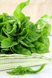 Bunch of fresh basil on a napkin Stock Images