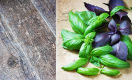 Bunch fresh basil on a wooden background. Aromatic spice Royalty Free Stock Images