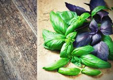 Bunch fresh basil on a wooden background. Aromatic spice. Royalty Free Stock Image