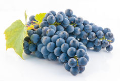 Bunch of fresh blue grapes isolated on white Royalty Free Stock Photos