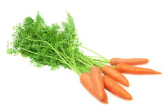 Bunch of fresh carrot. Stock Photography