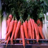 Bunch of fresh carrot Royalty Free Stock Images
