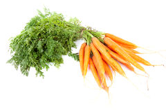 Bunch of fresh carrots Royalty Free Stock Photography