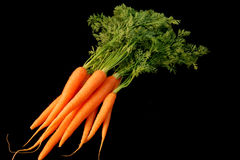Bunch of Fresh Carrots. Isolated bunch of fresh carrots on black background Royalty Free Stock Image