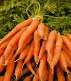 Bunch of fresh carrots in farmer's market Stock Image