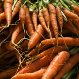 A bunch of fresh carrots Stock Image