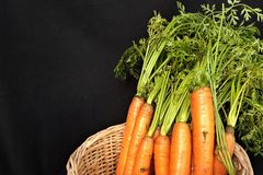 Bunch of fresh carrots with green leaves on a black. Background royalty free stock photo