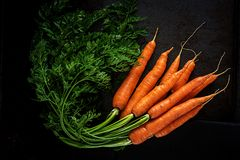 Bunch of fresh carrots with green leaves on dark background. Flat lay. Top view stock image