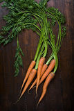 Bunch of fresh carrots Royalty Free Stock Photos