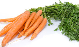 Bunch of fresh carrots Stock Images