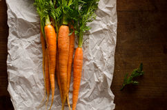A bunch of fresh carrots Royalty Free Stock Image