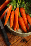 Bunch of fresh carrots Stock Photography