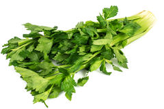 Bunch of fresh celery stalk with leaves Stock Images