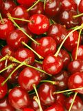 Bunch of fresh cherries Royalty Free Stock Image
