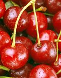 Bunch of fresh cherries Royalty Free Stock Images