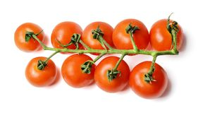 A bunch of fresh cherry tomatoes on a branch. White isolated background. Top view. stock image