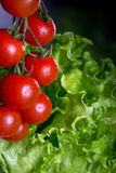 Bunch of fresh cherry tomatoes and green salad on a black backgr Stock Images