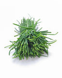 Bunch of fresh chives isolated Stock Image