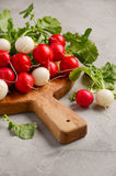 Bunch of fresh colorful radish on a grey concrete background. Selective focus, copy space Royalty Free Stock Photos