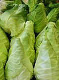 Bunch of fresh conical cabbage close uo royalty free stock photo
