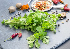 Bunch of fresh coriander herb with spices Stock Photos