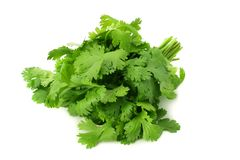 Bunch of fresh coriander leaves isolated on white background. Coriandrum sativum. cilantro royalty free stock photo