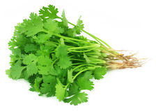 Bunch of fresh coriander leaves. Over white background Stock Photo