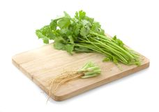 Bunch of fresh coriander leaves over white background stock images