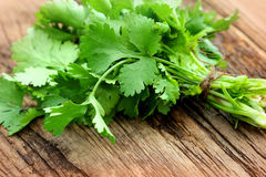 Bunch of fresh coriander Royalty Free Stock Photo