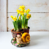 Bunch of fresh daffodils. Royalty Free Stock Images